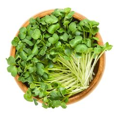 One of the big favourite: Radish microgreens.www.asmicrogreens.com #asmicrogreens #chefspecial #organic #microgreens #specialtyproduce #farmtotable #indoorgarden #verticalgarden #vegan #vegetarian #catering #chefs #plantbased #superfood #nutrients #market #eatlocal #livefood #localfood #eatfesh #cowichanvalley #victoria #nanaimo #ladysmith #millbay #cobblehill #cowichanbay #duncan #chemainus Radish Sprouts, Organic Seeds, Superfood, Food Dishes, Spinach, Herbs, Vegetables, Healthy, Food Fresh