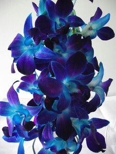 ***These blue and purple dendrobium orchids would be my top pick of flowers if we can get them and I think they would look awesome with the peacock feathers***