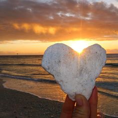 """""""I have decided to stick with love. Hate is too great a burden to bear.""""  Martin Luther King Jr.  _____ #MLK #martinlutherkingday #love #quote #quoteoftheday #sunset #ladyelliotisland #southerngreatbarrierreef #greatbarrierreef #beach #ocean #oceanlover #thisisqueensland #thisismyparadise #exploreGBR #exploreaustralia #happiness #gratitude #fuelhappiness #instagood #instadaily #inspiration #ig_australia #motivation #mermaid #mermaidlife #wanderlust #loveoverfear #seeaustralia #MLKDay by…"""