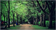 People taking a stroll inside the lush green Cubbon Park in Bangalore, India Picxlr: Photo magazine Bangalore India, Karnataka, Lush Green, Incredible India, More Pictures, Roots, Travel Destinations, Country Roads, The Incredibles