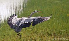 bird-photography-01