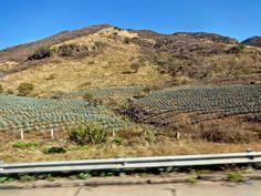 The Golden Years: Trip back to Mazatlan