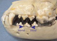 Regional nerve blocks key to delivering quality dental care