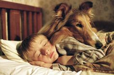 Those who were lucky enough to have a collie in their family will recognize and connect with the protective, watchful love that is a collie.  This photo is from the 2005 version of Lassie. So sweet.