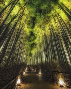 Sagano Bamboo Forest, Arashiyama, Kyoto, Japan, 嵯峨野. 嵐山, 竹林の道, 京都, 日本