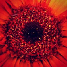 Featuring the center of a beautifil red/orange bloom, this flower image presents all of the color and detail fully. This original photograph was taken by Brittany Valente for Dream By Day Creations.   http://www.dreambydaycreations.com
