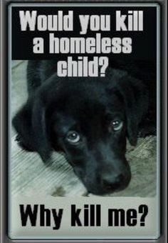 the human species is the cruelest on earth...no respect for life of others