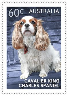Top Dogs stamps: Charlie, the King Charles Spaniel. #stampcollecting