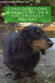 If you have a dog, chances are you see them as part of the family and want them to come on holiday with you. However, there's a few things you need to consider when going on dog-friendly holidays. Click through to find out my views and advice on holidaying with your canine, including accomodation, activities and eating and drinking.