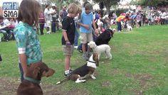 Campaña para esterilizar animales, en San Miguel de Allende. http://www.portalsma.mx/sma/index.php/noticias/2026-campana-de-esterilizacion-para-perros-y-gatos-en-sma #SanMigueldeAllende #Noticias #Mascotas #SMA #Interés