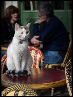 The Café Cat at Rue de Médicis * Paris