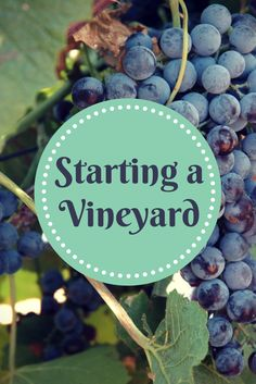 how to become a viticulturist
