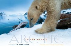 Imax following polar bears