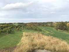 South Vineyard early Oct 2018