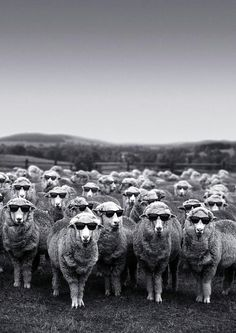 We are not sheep. We are not goats. We are not lambs. We certainly are not deer. My darling, we are.the Ovejas Funny Animals, Cute Animals, Tier Fotos, Belle Photo, Black And White Photography, Make Me Smile, Creatures, Cool Stuff, Pets