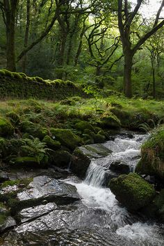 Halstock Wood, Dartmoor, Devon, England by @Miles Wolstenholme