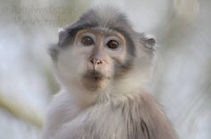 Cute Monkey, Nature Photography, Game Of Thrones Characters, Facebook, Fictional Characters, Art, Art Background, Kunst, Nature Pictures