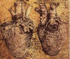 Two views of a heart, Leonardo Da Vinci, 1513. The first known heart drawn as we would anatomically recognize it today.