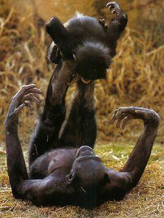 wearetheweavers:  bonobo acro-yoga