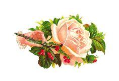 Clip Art Designs, Vector Clip Art Graghic: white rose