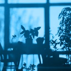 Image de plants, shadow, and aesthetic Kyoko Sakura, Art Ancien, Shadow Play, Shadow Art, Brown Aesthetic, Cream Aesthetic, Mellow Yellow, New Wall, Light And Shadow