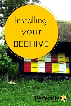 Got a question about beehives? Find your answer here, in this In-Depth Article about choosing the best beehive, and installing it yourself.
