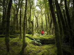 13 Times New Zealand's South Island Took Scenery Too Damn Far New Zealand South Island, Green Earth, Walking In Nature, National Parks, Scenery, Handsome, Country Roads, Trees, Explore