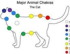 cat chakras