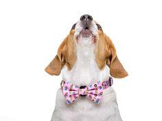 Princess Collection, Bows, Tie, Accessories, Necklaces, Dogs, Arches, Bowties, Cravat Tie