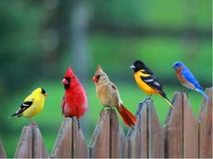 Well Are You A True Believer?: If you are a true believer of Angry Birds then you will see what I see in this picture. I see the whole cast of the Angry Birds Kinds Of Birds, All Birds, Little Birds, Angry Birds, Love Birds, Pretty Birds, Beautiful Birds, Animals Beautiful, Cute Animals
