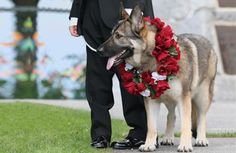 Jamaican Weddings: Can your dog be your best man? | THE ISLAND JOURNAL