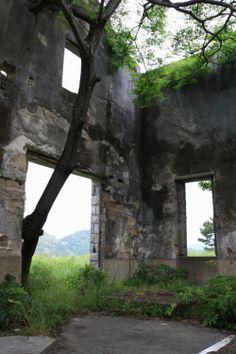 Tree growing in ruins