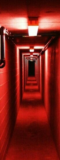Car park walkway underneath the Melbourne Museum, Victoriathis would be spooky Melbourne Museum, The Rouge, Red Images, Bing Images, I See Red, Simply Red, Red Rooms, Foto Art, Red Aesthetic