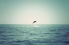 """""""To the dolphin alone nature has given that which the best philosophers seek: friendship for no advantage."""""""