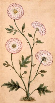 Floral illustration.
