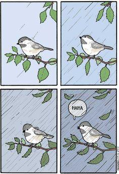 False Knees is a webcomic written by Joshua Barkman. Funny Animal Comics, Cute Comics, Funny Animals, Funny Comics, Bird Quotes, Larry Bird, Short Comics, Stuff And Thangs, Funny Cute
