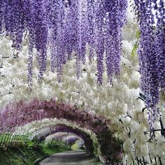 These Photos of Japan's Wisteria Tunnel Are Straight Out Of a Fairytale  - Condé Nast Traveler