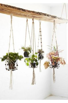 A collection of hanging plants. A collection of hanging plants. Balcony Plants, House Plants Decor, Indoor Plants, Balcony Garden, Potted Plants, Diy Planters, Hanging Planters, Planter Ideas, Pot Hanger