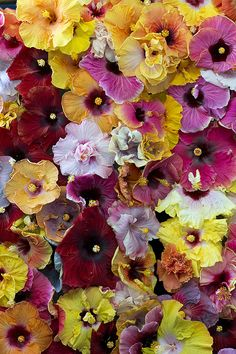 flower, colour, power