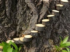Clever idea from my husband: Steps to tree stump fairy garden made from tree limb coins/wedges, with a nail hammered into side, nail head cut off, the… - Alles über den Garten Fairy Garden Houses, Gnome Garden, Garden Trees, Garden Stairs, Fairy Gardening, Garden Kids, Organic Gardening, Gardening Tips, Urban Gardening