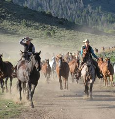 Wyoming cowgirls - I would love to do this, Cattle or horse drives wow.