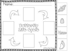 Butterfly Life Cycle! {Informational} White Desk Design, Butterfly Life Cycle, Vocabulary Cards, Morse Code, Spring Is Here, Life Cycles, Worksheets, 3d Printing, Coding