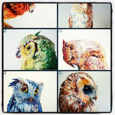 Photo by andy65536 Watercolor And Ink, Owl, Bird, Gallery, Instagram Posts, Animals, Animales, Roof Rack, Animaux