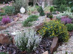 Steingarten anlegen - Welche Pflanzenarten sind am besten geeignet?