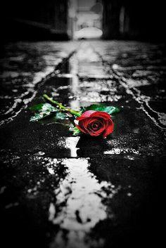 Rose l Artistic Photography ☮ * ° ♥ ˚ℒℴѵℯ cjf Splash Photography, Rose Photography, Artistic Photography, Photography Backdrops, Romantic Roses, Beautiful Roses, Flower Wallpaper, Wallpaper Backgrounds, Rose Photos
