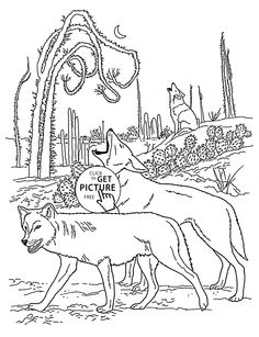 Coyotes animal coloring page for kids, wild animal coloring pages printables free - Wuppsy.com
