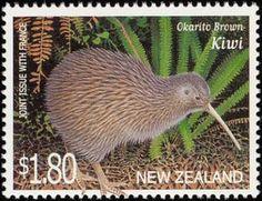 Okarito Brown Kiwi (Apteryx rowi)
