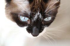 Rufa, my cat