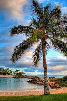 Ko Olina Lagoon, Oahu, Hawaii One of our top favorite places to snorkle! Hawaii Vacation, Hawaii Travel, Dream Vacations, Vacation Spots, Oahu Hawaii, Hawaii Hotels, Vacation Rentals, Places To Travel, Places To Go