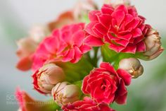 Mini Flower by Caspario #nature #photooftheday #amazing #picoftheday